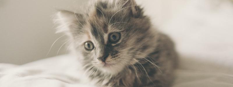 Allergie aux poils de chat